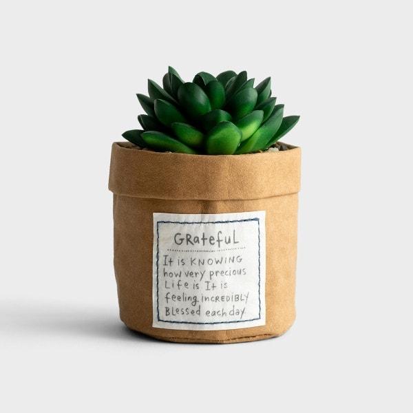 Faux Succulent - Grateful